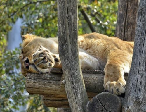 The importance of sleep on productivity